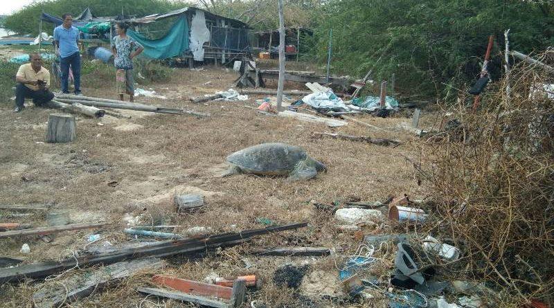 ตื่นเต้น!! ชาวประมงพบเต่าตนุตัวใหญ่ โผล่หาดปากน้ำปราณ