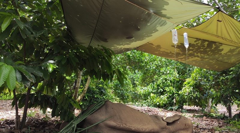 น่าสงสาร!!พบช้างป่ากุยบุรี ล้มเจ็บในสวนขนุนสามร้อยยอด