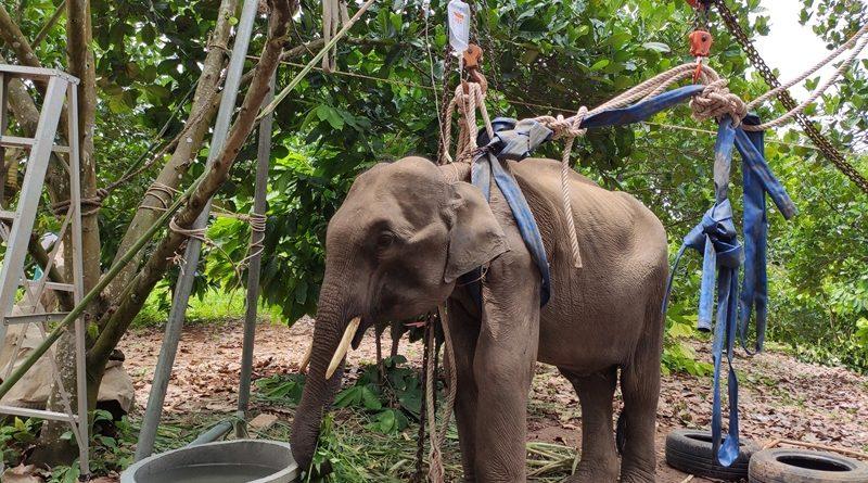 น่าดีใจ!ช้างป่ากุยบุรี อาการเริ่มดีขึ้นกินได้